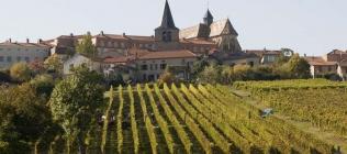 Vendanges Côtes roannaises à Ambierle chez Yann Palais